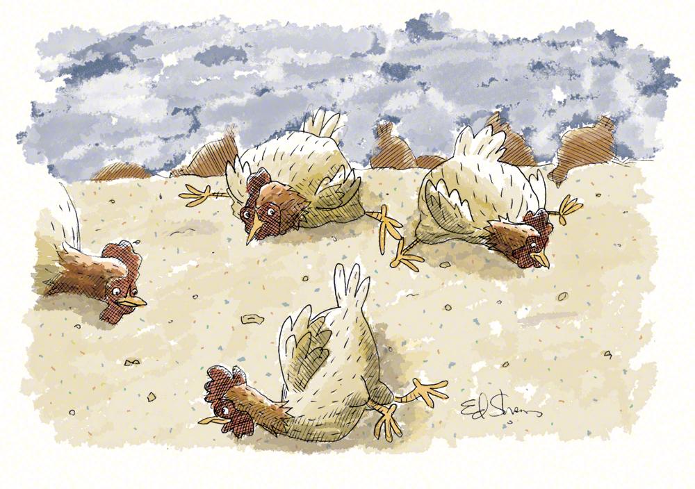 Perdue factory farm editorial illustration